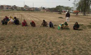 Grass planting